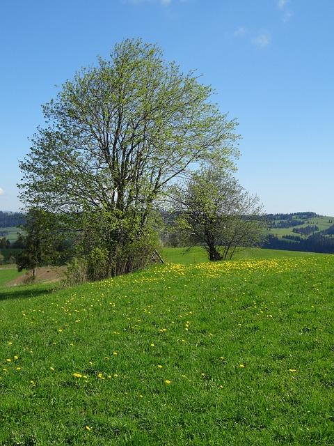 Tree, Meadow, Spring, Landscape, Poland, Polyana, Green