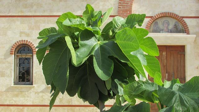 Fig Tree, Leaf, Green, Garden, Cyprus
