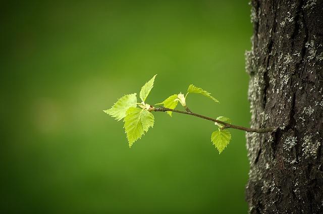 Spring, Leaves, First Leaves, Branch, Green, Leaf