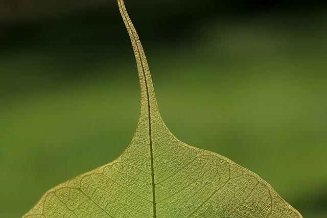 Leaf, Nature, Plant, Green, Close, Vein, Macro