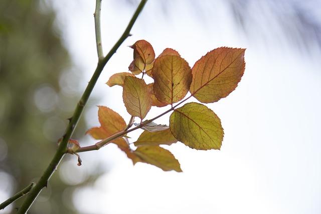 Leaves, Leaf, Nature, Green, Rose Leaves