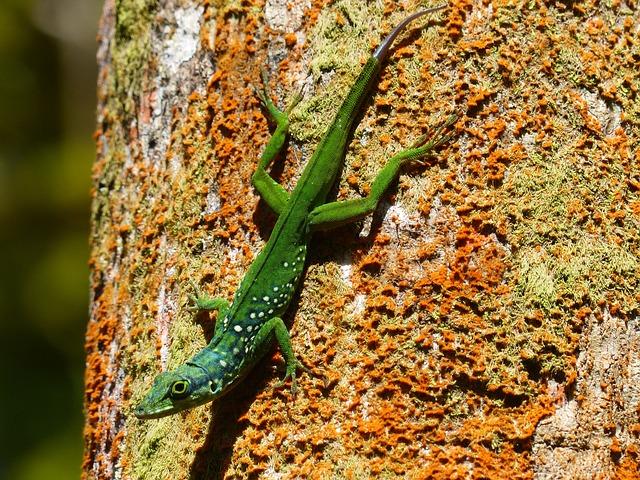 Lizard, Green, Animal, Exotic, Fauna, Martinique