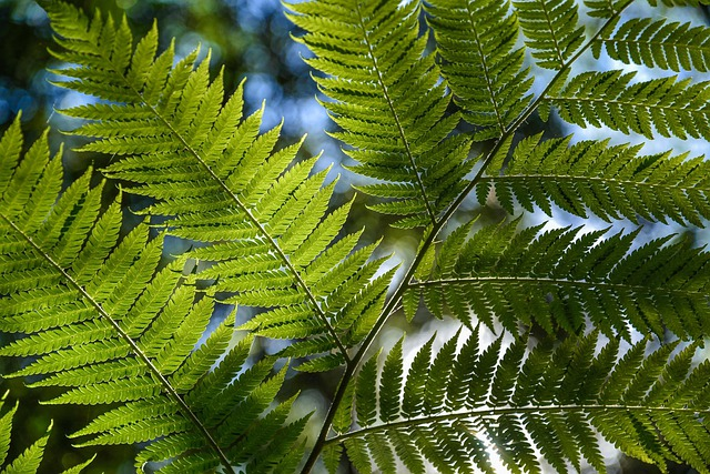 Tree Fern, Rainforest, Foliage, Tropical, Green, Lush