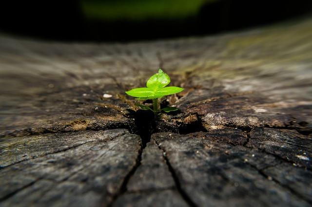 Tree, Macro, Bark, Wood, Close Up, Green, Small Tree