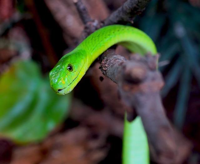 Snake, Green Mamba, Toxic, Dangerous, Mamba, Scale