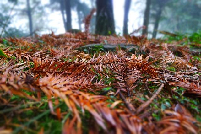 Ground, Falling Leaf, Mein, Green