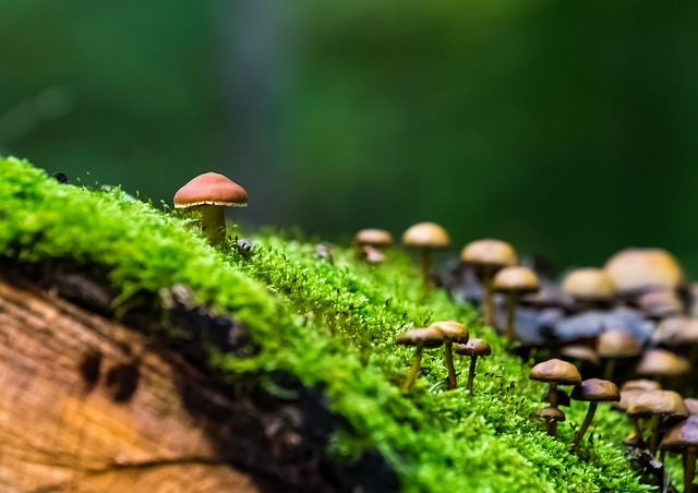 Nature, Forest, Mushrooms, Green, Moss, Autumn Forest