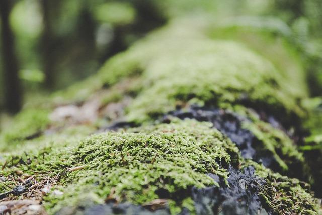 Moss, Forest, Ground, Nature, Mushroom, Green