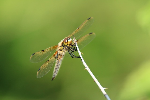Dragonfly, Wing, Insect, Close, Green, Nature