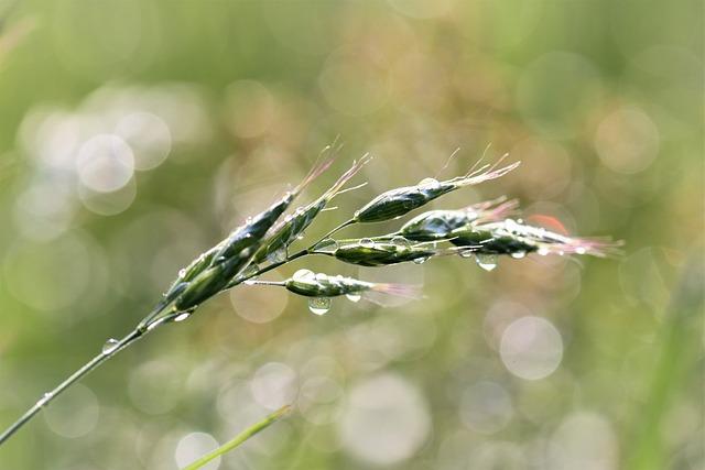 Grass, Meadow, Raindrop, Nature, Green, Grasses