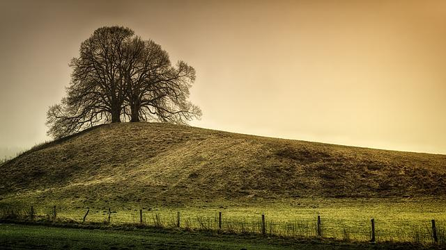 Tree, Hill, Landscape, Nature, Green, Meadow, Rural