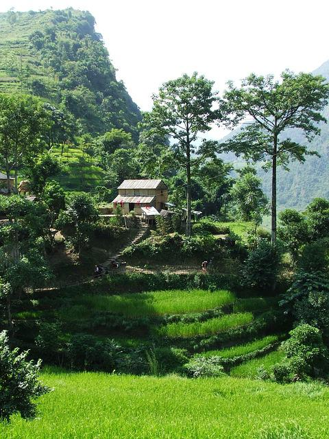 Nepal, Annapurna, Trekking, Trees, Green, Cottage