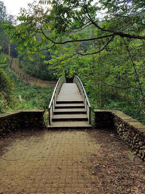 Bridge, Forest, Path, Nature, Landscape, Outdoor, Green
