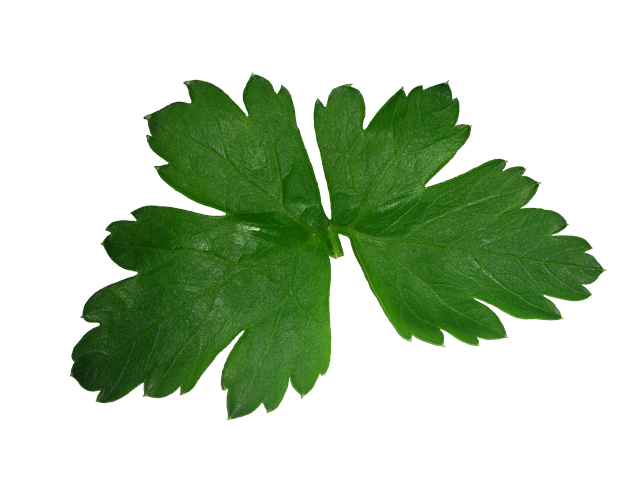 Parsley, Leaf, High, Texture, Green, Plant