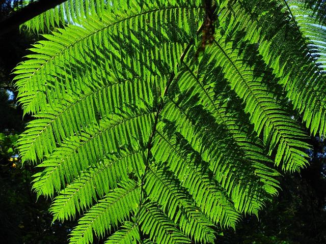 Plant, Fern, Green