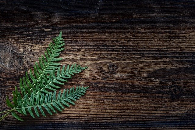 Fern, Small Fern, Green, Plant, Wood, Brown