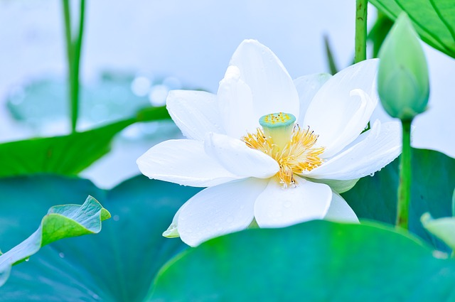 Natural, Plant, In The Early Summer, Flowers, Green