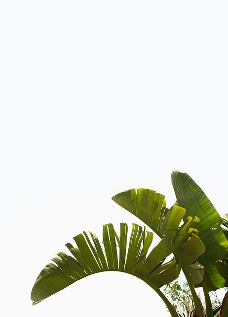 Palm, Plant, Green, Mediterranean, Palm Fronds