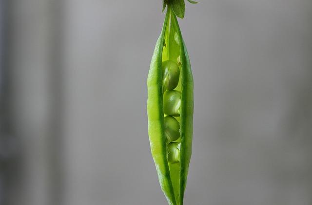 Pea, Pod, Green, Vegetable, Plant