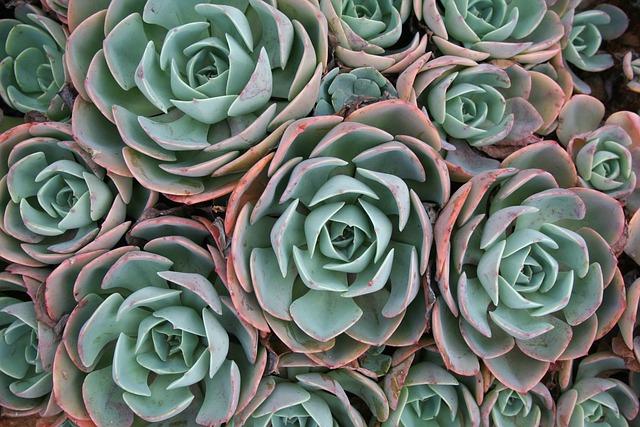 Succulent, Plant, Green
