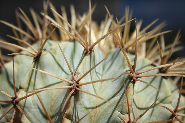 Cactus, Tropical, Tropics, Exotic, Plant, Green, Flora
