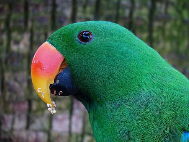 Parrot, Bill, Red Orange, Plumage, Green, Colorful