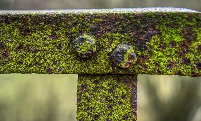 Railing, Bridge, Rusty, Old Broken, Moss, Grass, Green