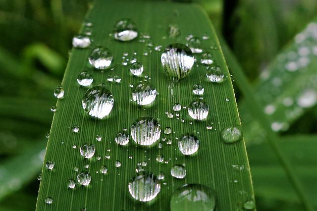 Raindrop, Dew, Reed, P, Nature, Green, Water, Leaf, Wet