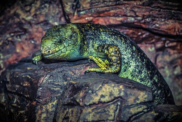 Lizard, Reptile, Green, Animal, Nature