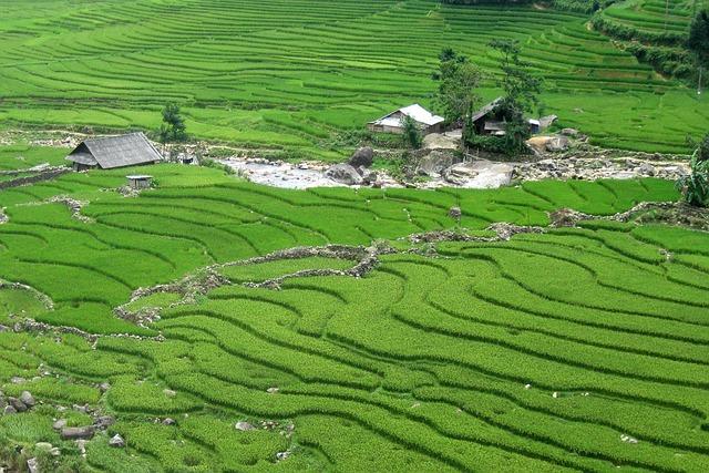 Travel, Vietnam, Sapa, Rice Field, Green, Tour