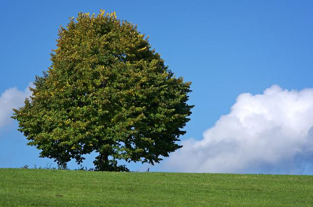 Tree, Individually, Meadow, Nature, Sky, Green, Pasture