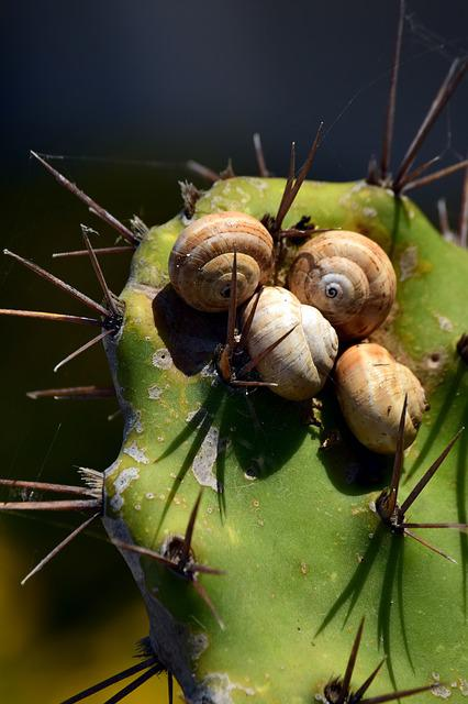 Cactus, Green, Snails, Snail Shells, Spur, Protection