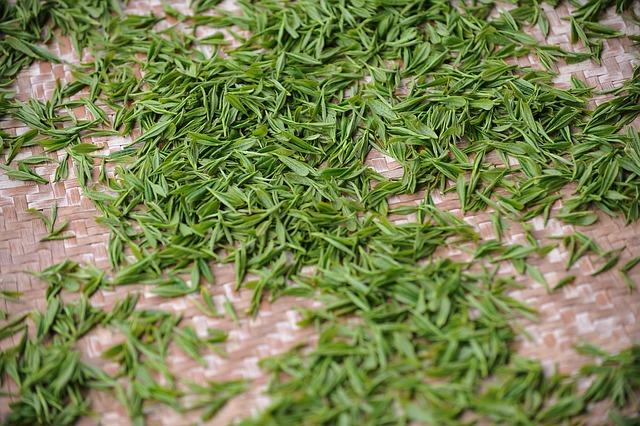 Tea Garden, Tea, Green Tea