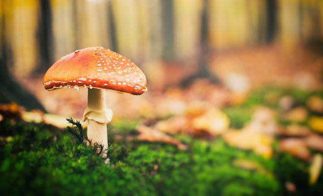 Toadstool Once, Forest, Trees, Nature, Green, Meadow