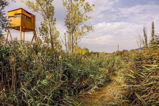 Marsh, Nature, Tourism, Travel, Bulgaria, View, Green