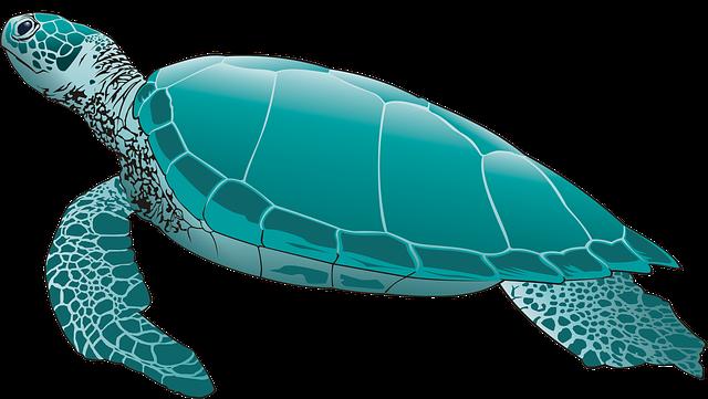 Sea Turtle, Green Turtle, Turtle, Scuba Diving, Seabed