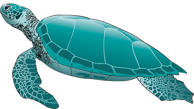 Sea Turtle, Green Turtle, Turtle, Scuba Diving, Seabed