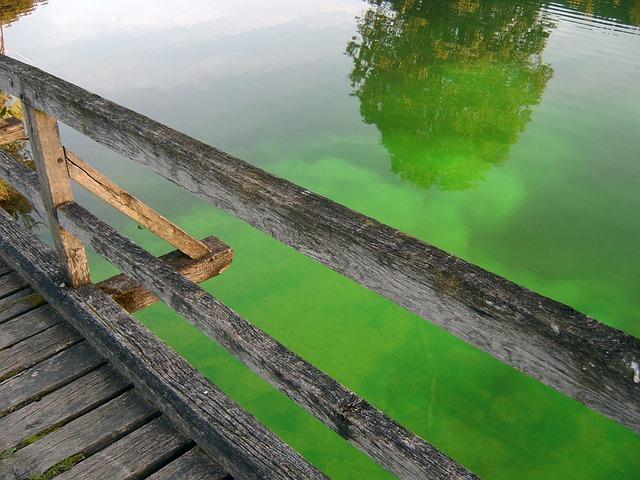 Green, Water, Green Water, Wooden Bridge