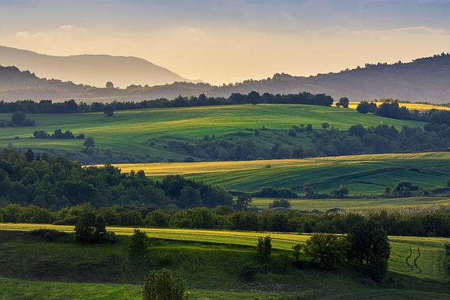 Fileds, Wheat, Agriculture, Nature, Green, Colors