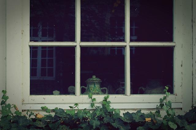 Window, Ivy, Wall, Facade, Green, Fouling