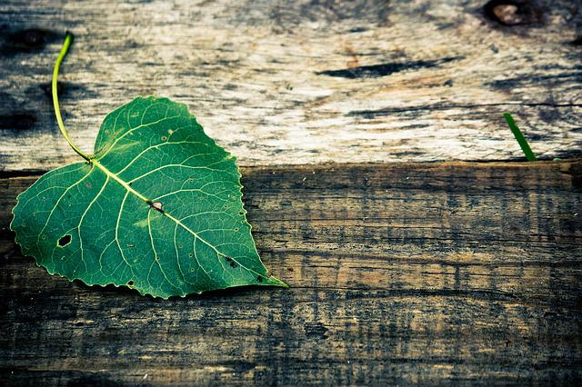 Close-up, Color, Green, Green Leaf, Leaf, Wood, Wooden