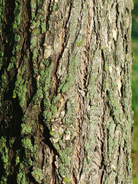 Tree, Bark, Lichen, Wood, Trunk, Rough, Moss, Green