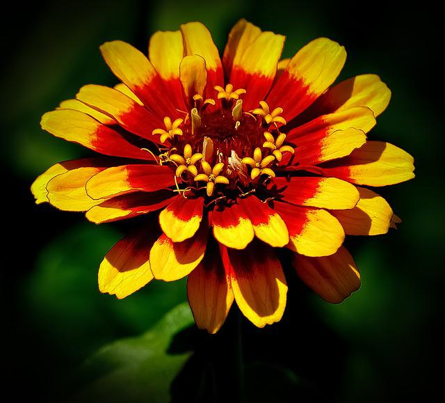 Flower, Red, Yellow, Green, Nature, Beautiful, Floral