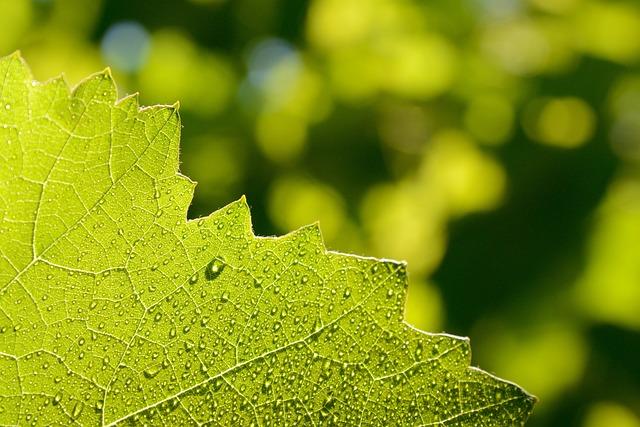 Sheet, Green, Greens, Drops, Closeup, Plants, Juicy