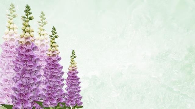 Greeting Card, Foxgloves, Desktop, Greeting, Garden
