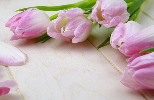 Flower, Tulip, Plant, Nature, Floral, Greeting Card