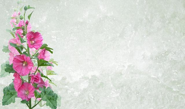 Greeting Card, Flower, Flora, Nature, Leaf, Summer