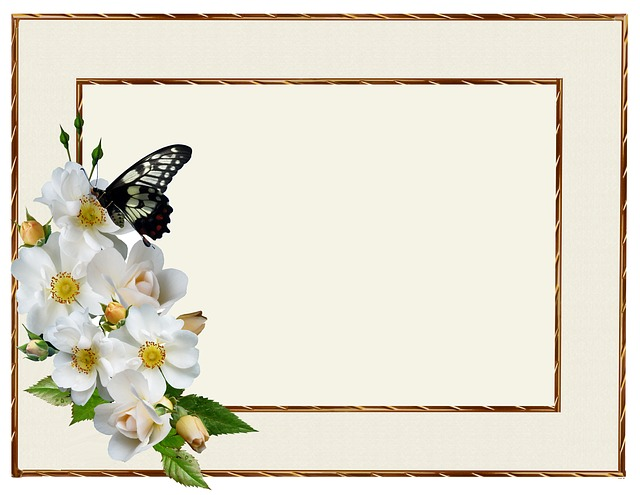 Greeting Card, White Rose, Butterfly