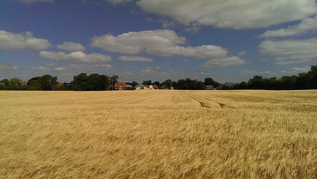 Greifswald, Corn, Clouds