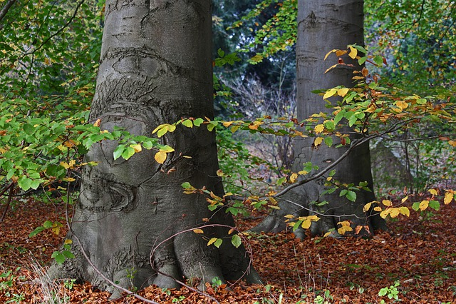 Arboretum, Greifswald, Park, Autumn Forest, Leaves